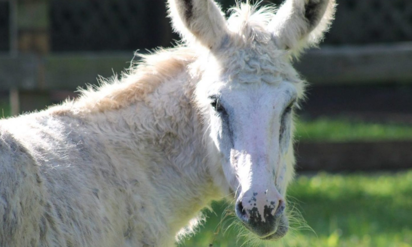 The face of a donkey in a zoo